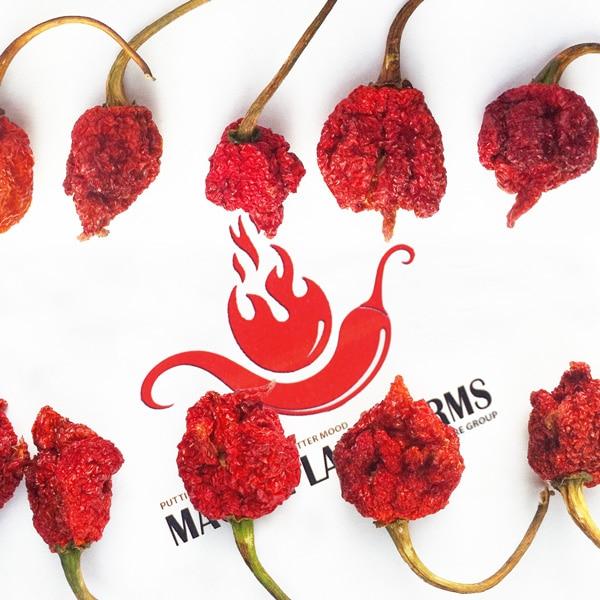 Dried Carolina Reaper Pods | Carolina reaper chili pepper